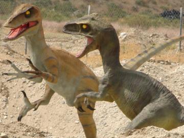 Raptors