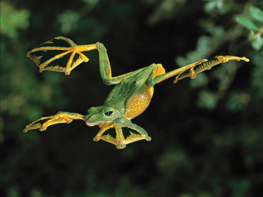 when_frogs_fly