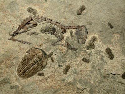cambrianrabbit