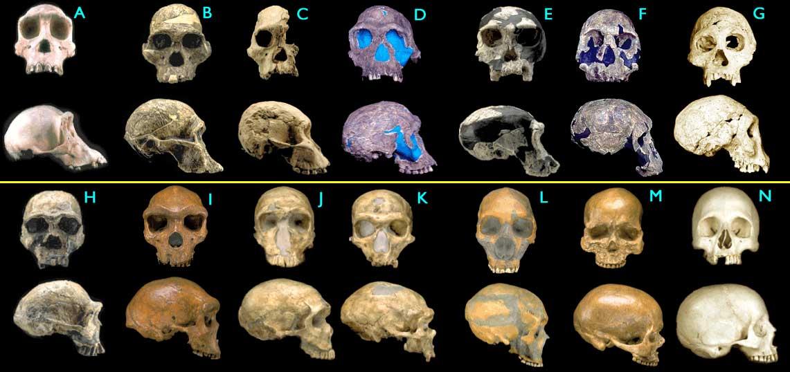 hominids2_big