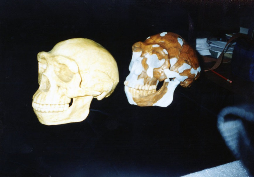 Two reconstructions of Peking Man, old and new.